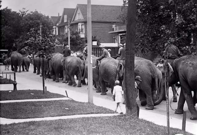 elephants-to-race-track-1920-brock-st.jpg